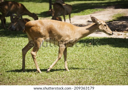 The roe deer walking in the wild  - stock photo