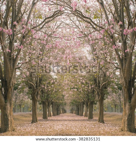 The romantic tunnel of pink flower trees