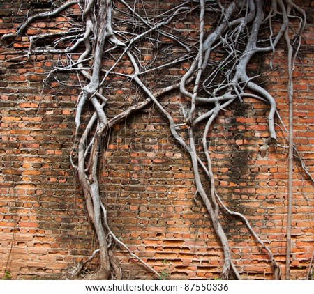 The roots of civilization. - stock photo