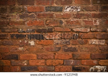 The rough brickwork of an Old Brick wall, makes a great background.