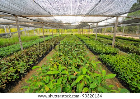 The rows of young plants growing