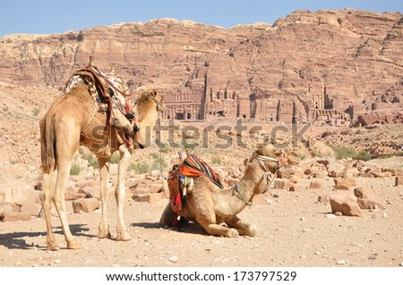 The royal tombs with two camels in front, Petra, Jordan - stock photo