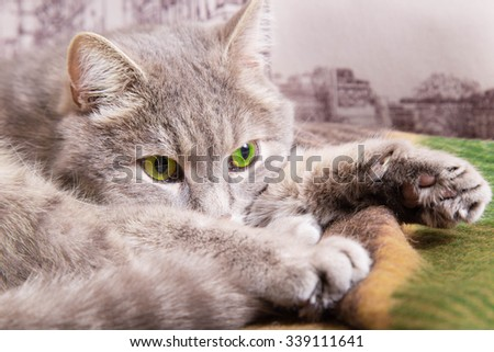 the sad gray cat with green eyes lies on a checkered woolen plaid - stock photo