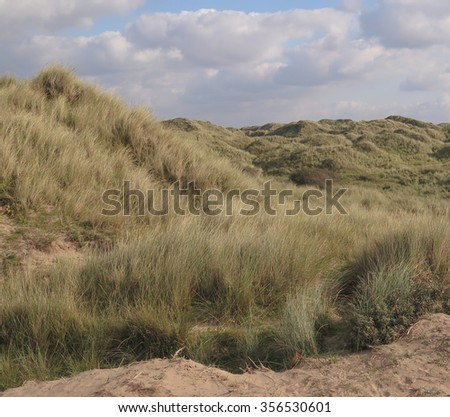 The Sand Dune System at Braunton Burrows and Woolacombe Beach on the  Coast of North Devon, England, UK - stock photo