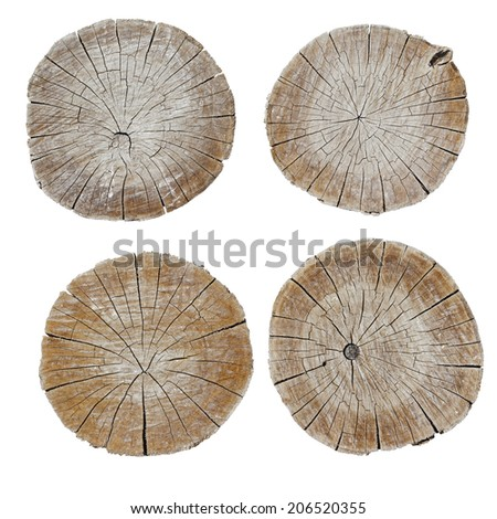 The saw cut logs on a white background - stock photo