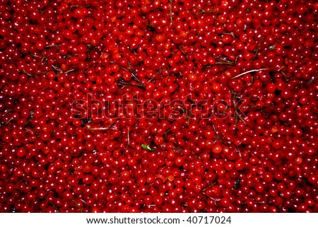 the scattering of red berry - stock photo
