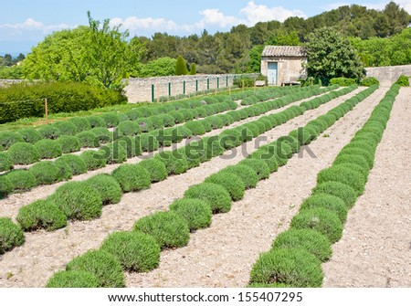 The scenic garden with a small lavender field located on the territory of the psychiatric center at Monastery Saint-Paul de Mausole, Saint-Remy-de-Provence, France. - stock photo