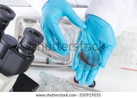 The scientists science. Check the DNA from the hair in the lab.  - stock photo