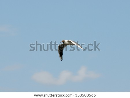 The seagull flying on a background of the sky in searches of meal