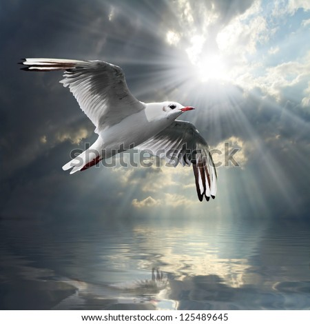 The Seagull flying over a sea against a dramatic sky. Background from nature. - stock photo