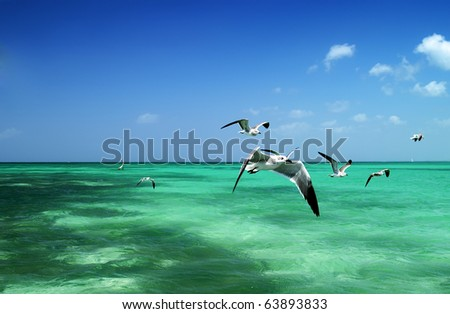 The seagull flying over the sea - stock photo