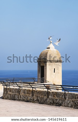 The seagull in Monaco on a background of a marine landscape - stock photo