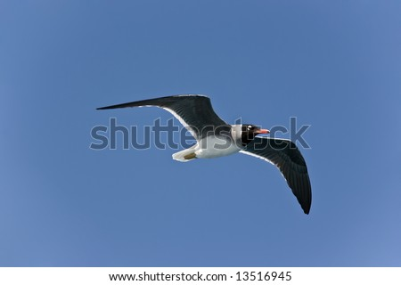 The seagull in the sky over The Red Sea - stock photo