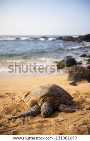 The seashore in which a sea turtle is present -2
