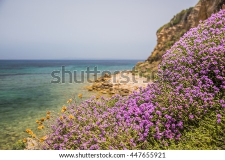 The seaside landscape of Zakynthos with the blooming thyme. Porto Roma beach. - stock photo