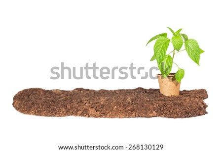 The seedling in a peat pot is on the ground  isolated white background - stock photo