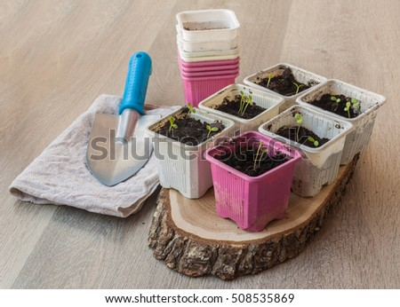 The seedlings in plastic pots on wooden background. Spring works