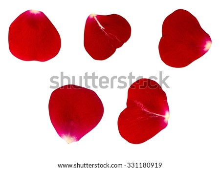 The set of petals of dark red roses. Isolated background
