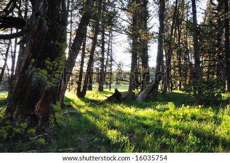 The setting sun streams through the trees on the Continental Divide near Targhee Pass. - stock photo