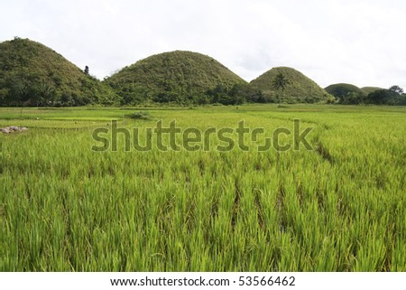 The seven sisters, part of the chocolate hills of bohol, rising up over lush green rice paddies in the philippines - stock photo