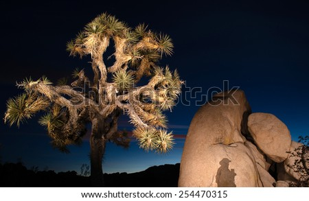 The shadow of the photographer lands on a huge rock near a Joshua Tree - stock photo