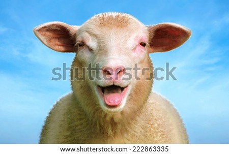 The sheep Lucie - Digital image processing from photo. - stock photo
