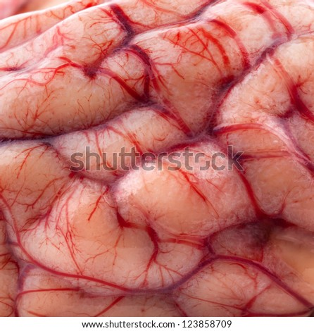 The sheep's brain, macro - stock photo