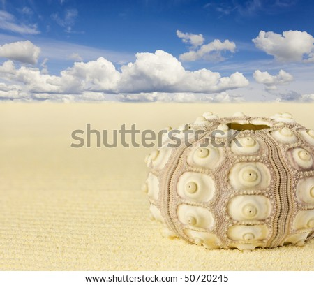 The shell of the sea urchin on the beach - Collage - stock photo