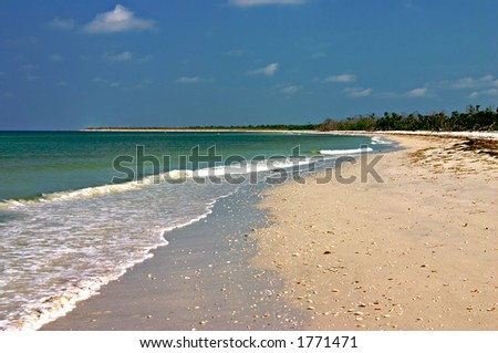 The shell strewn beach at Cayo Costa before anyone's walked on it today - stock photo