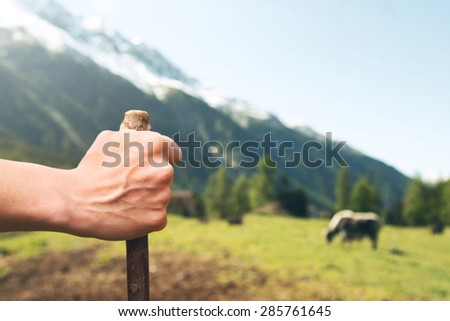 the shepherd controlling livestock in his ranch - stock photo