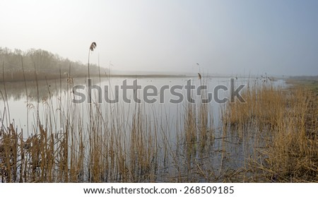 The shore of a foggy lake in spring - stock photo