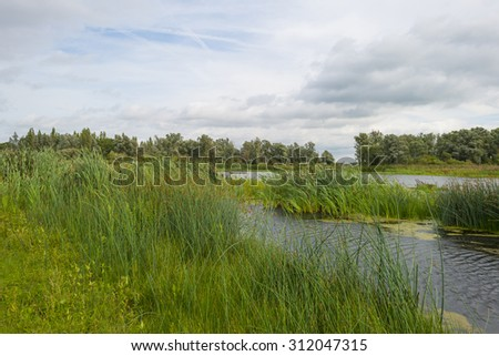 The shore of a lake in summer