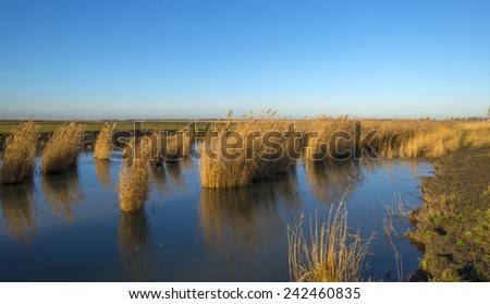 The shore of a lake in winter under a clear sky