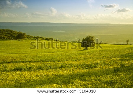 The sicilian landscape, an isolated tree in the country - stock photo