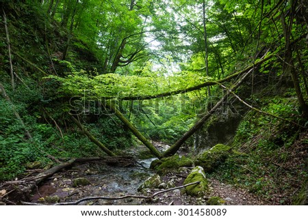The Sighistel gorge from Apuseni natural reserve in Romania