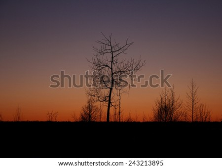the silhouette of a tree at sunset, Russia, near Moscow - stock photo