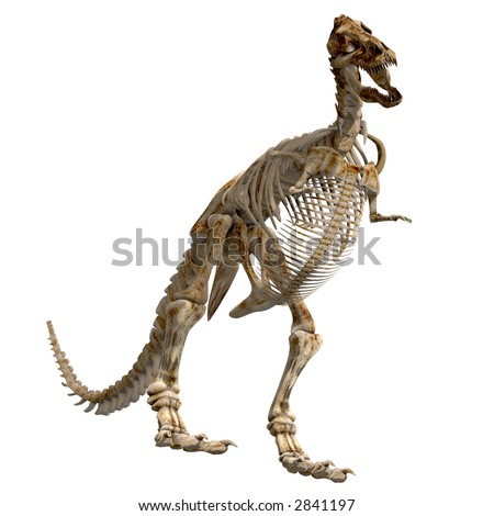The skeleton of a Tyrannosaurus Rex from different views