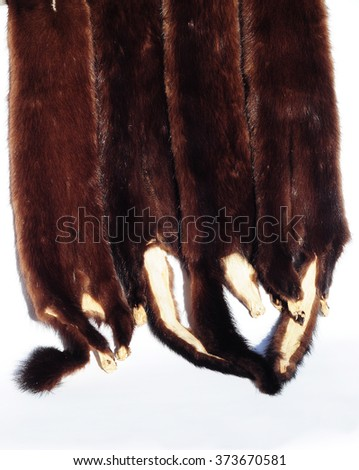 the skins of a sable siberian sable fur - Sable Color Cultura