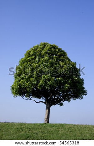 The sky blue with the lengthwise point of view and one tree - stock photo