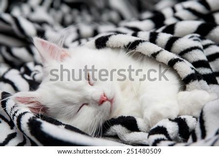 The sleeping cat - stock photo