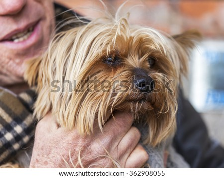 The small amusing shaggy doggie sits on hands at the owner