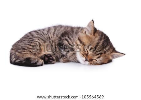 The small British kitten sleeps on one side. - stock photo