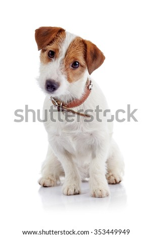 The small doggie of breed a Jack Russell Terrier sits on a white background - stock photo