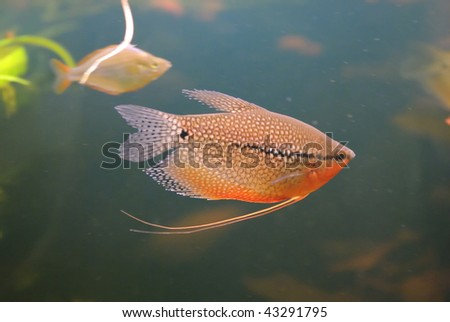 The small fish floats - stock photo
