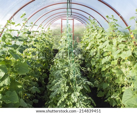 The small garden greenhouse from a polycarbonate material - stock photo