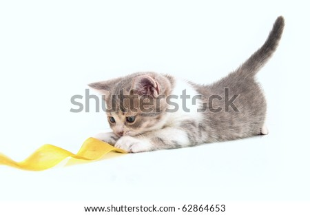 The small kitten plays a yellow tape - stock photo