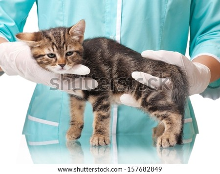 The small kitten recovers after an anesthesia on hands at the veterinarian - stock photo