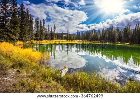The small superficial lake is surrounded with coniferous forest. Sunny autumn day in Jasper National Park  in Canada - stock photo