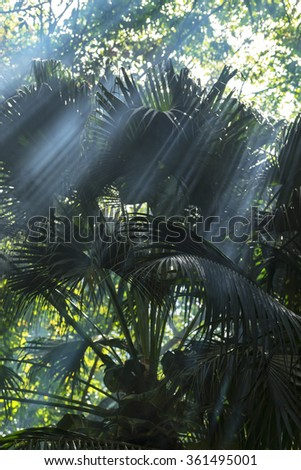 The smoke in the jungle - stock photo