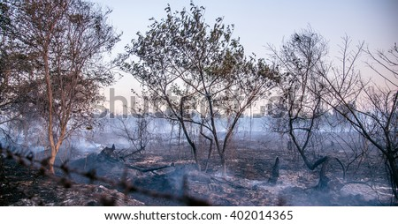 The smoke of Forest fire on gloaming, Happy Halloween, bush fire destroy tropical forest - stock photo